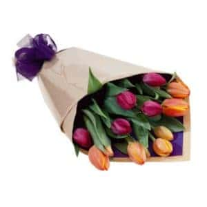 Wrapped Tulips